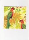 farebné papagáje