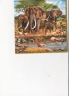 Slony a africké zvieratá