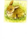 Veľký zajac v tráve