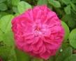 Vôňe do kozmetiky a sviečky10ml-Damašský kvet