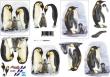 3D obrázky- Tučniaci