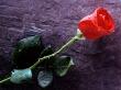 Vôňe do kozmetiky a sviečky10ml-ruža