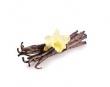 Vôňe do kozmetiky a sviečky 10 ml-orchidea+vanilka