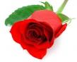 Vôňe do kozmetiky a sviečky 10 ml-ruža